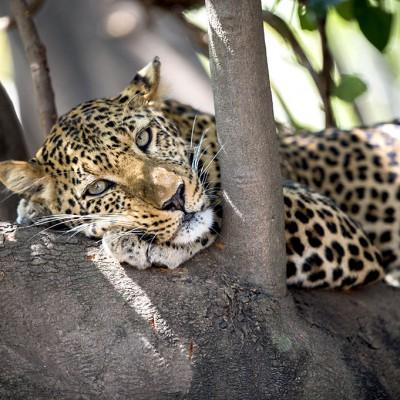 Zambie : découverte de la faune sauvage