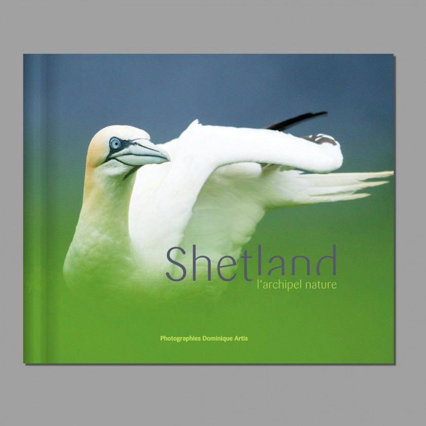 À découvrir  : mon livre sur les oiseaux des îles Shetland