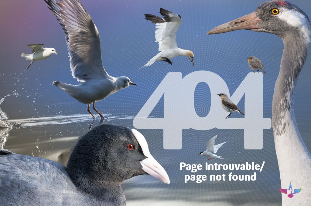 visuel-page-404