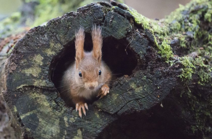 Les écureuils de la forêt de Meudon