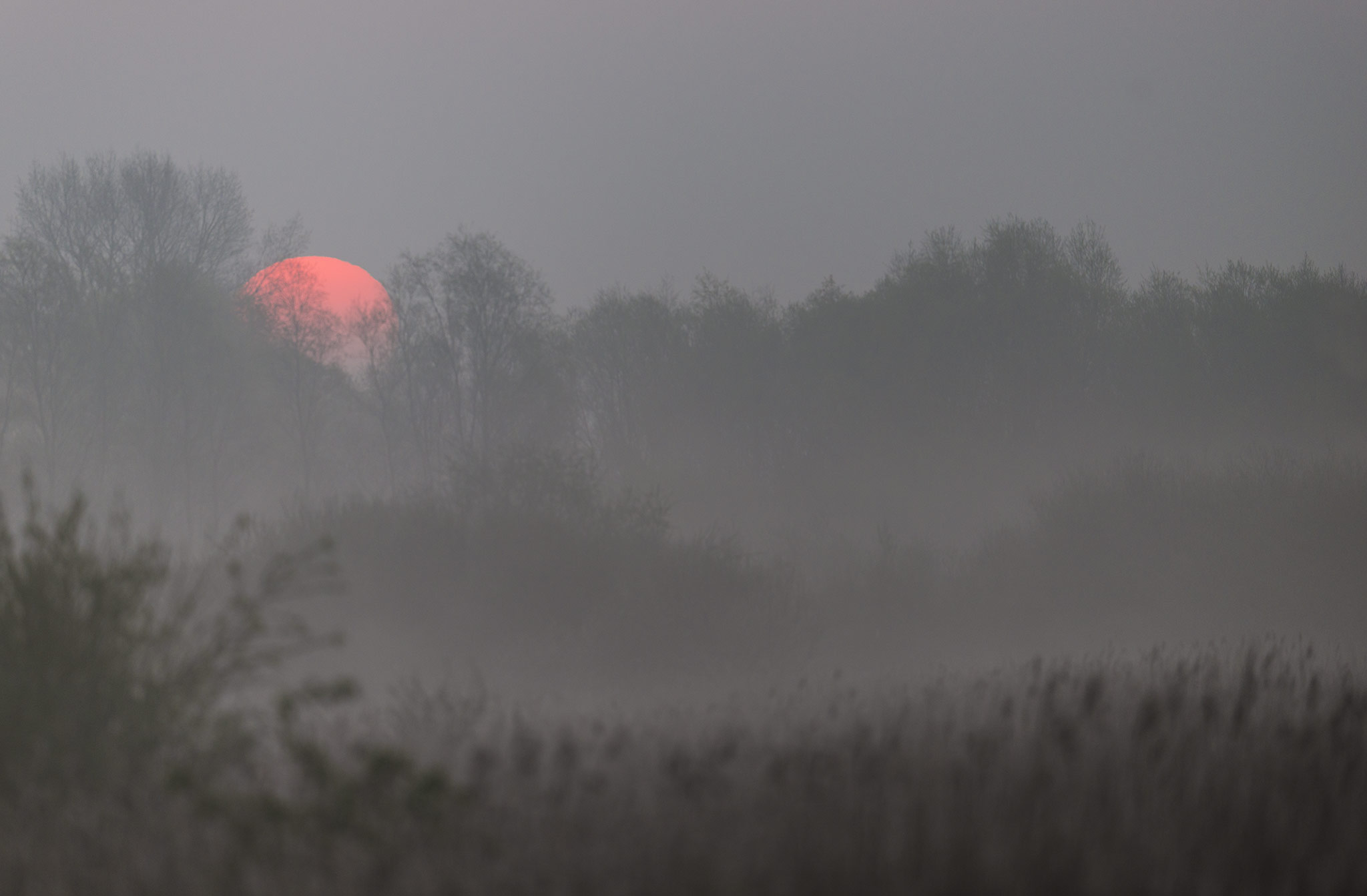 Soleil se levant sur la renclôture Elluin