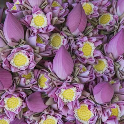 Le lotus est la fleur sacrée dans les religions orientales (bouddhisme, brahmanisme) dans lesquelles les divinités sont représentées sur un trône en fleur de lotus. La fleur de lotus symbolise fertilité, prospérité et longévité.