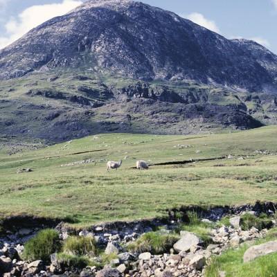 Connemara - Comté de Galway  - Irlande 1984