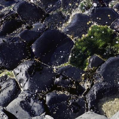 Chaussée des Géants - Comté d'Antrim, Irlande du Nord - 1984Chaussée des Géants - Comté d'Antrim, Irlande du Nord - 1984