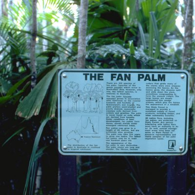 Fan palms fight for light in the Daintree Rainforest in tropical northern Queensland