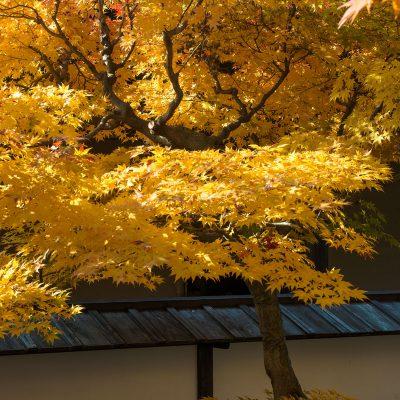 Résidence historique des gouverneurs : Jardin intérieur de Takayama Jinya