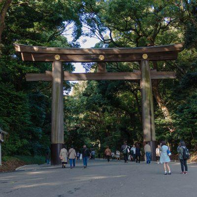 L'entrée du temple Meiji-jingu. Le gigantesque torii en bois de l'entrée et l'allée principale. Isolé dans un écrin boisé au cœur de Tokyo, le Meiji-jingu est une perle du culte shintô et au centre de la vie culturelle tokyoïte.