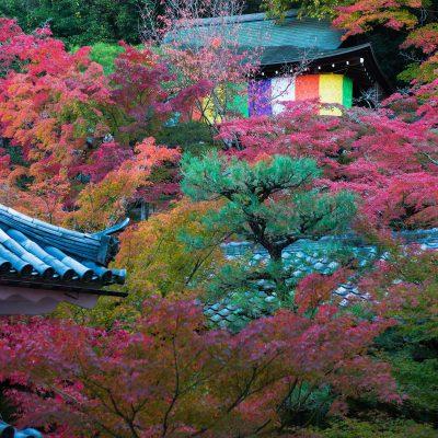 Le temple Eikando Zenrin-ji Parfaitement intégrés au cadre naturel qui les entoure, les édifices se dressent à différents niveaux et sont reliés par un jeu de passerelles et de ponts surélevés.