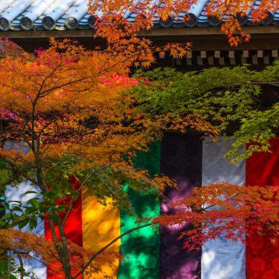 Le Eikandō Zenrin-ji est le premier temple de la branche seizan de la secte japonaise bouddhiste Jōdo-shū, situé dans l'arrondissement de Sakyō-ku à Kyoto.