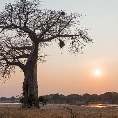 Le parc National du Sud Luangwa se trouve à l'est de la Zambie. C'est le plus méridional des trois parcs nationaux du bassin de la rivière Luangwa, paradis pour la faune sauvage. La rivière Luangwa est un des affluents principaux du Zambèze avec une longueur de 806 km, et un des quatre plus grands cours d'eau de Zambie.