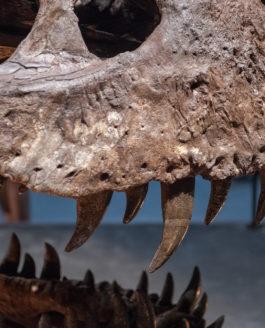 Dinosaure : vu l'exposition un T. Rex à Paris !