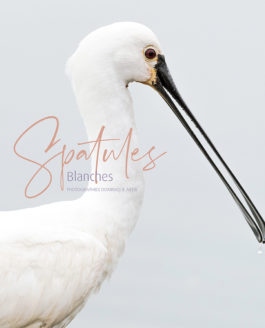 Spatules Blanches, mon nouveau livre