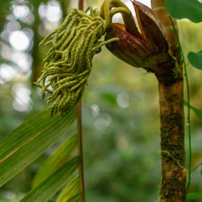 Forêt tropicale nuageuse de Santa Elena